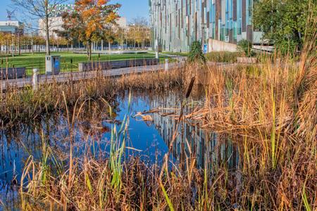 sciencepark-Utrecht.3 - Tussen al het staal,glas en steen van de moderne architectuur een mooi plekje natuur om uit te rusten. Op de achtergrond zien we het Heijmans van den - foto door hvr2105 op 06-03-2021 - deze foto bevat: architectuur, utrecht, science park, heijmansgebouw