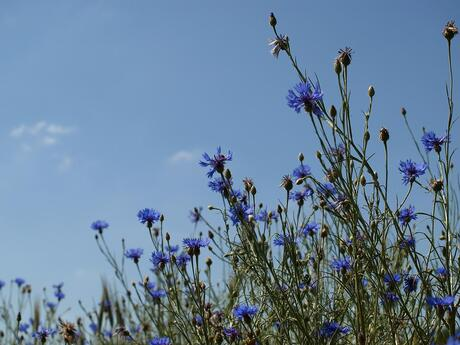 zomer blauw in Oud Avereest