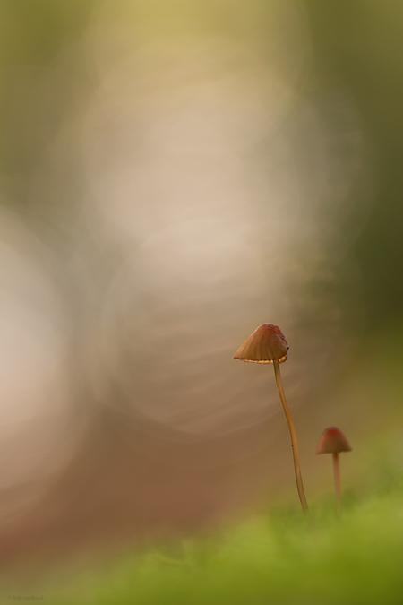 A touch of light - - - foto door mourik57 op 30-10-2019 - deze foto bevat: macro, natuur, licht, herfst, paddenstoel, bos, twee, sfeer, oktober, brigit, bokeh