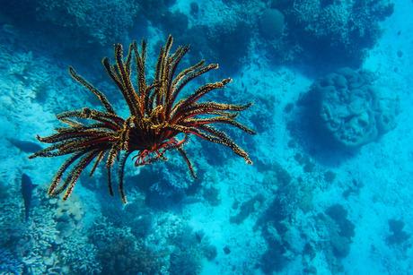 Snorkelen bij Menjangan - Indonesia