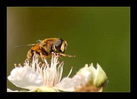 * karate * - bedankt voor de vorige reacties.. en nog een fijne avond. Titel heeft @rianne bedacht... ;)  gr. Linda - foto door @Linda op 11-07-2008 - deze foto bevat: macro, wesp, bij, insect, close-up, -linda