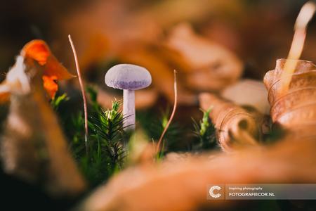Freubelen in het bos - Geen idee welke paddenstoel het is maar de setting sprak mij aan. Een mooi moment om even te freubelen in het bos en wat ervaring op te doen met macr - foto door Fotografiecor op 19-10-2017 - deze foto bevat: roze, groen, paars, kleur, macro, bladeren, natuur, bruin, paddestoel, herfst, mos, landschap, bos, tegenlicht, bokeh