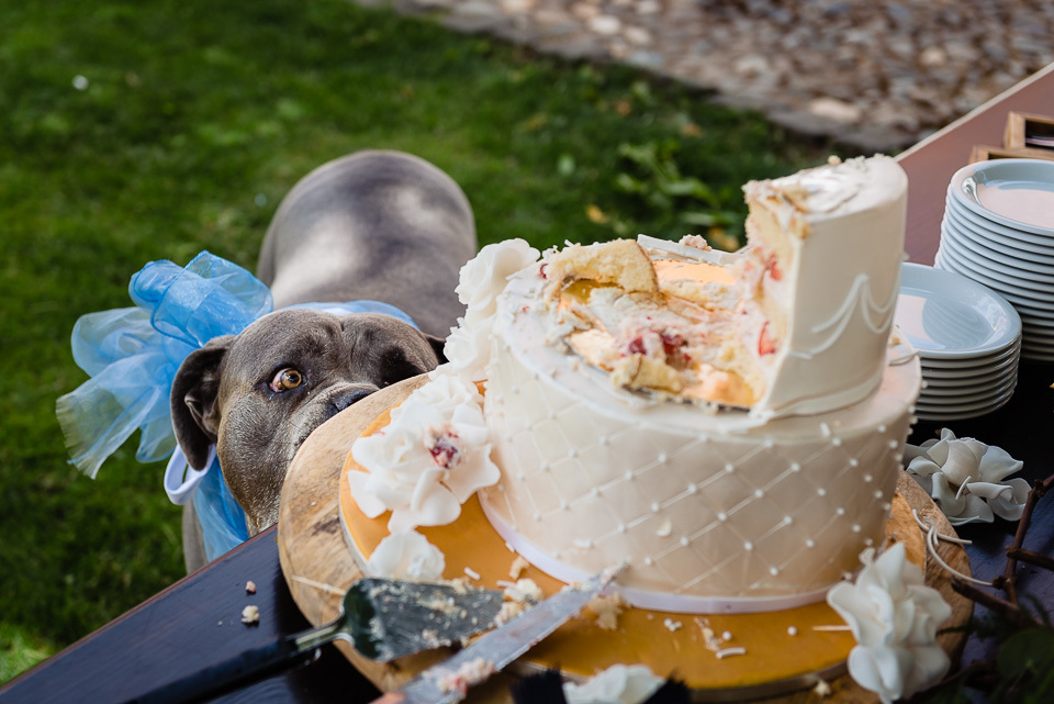 I am Hungry ! - - - foto door stan83_zoom op 26-11-2019 - deze foto bevat: honden, huwelijk, bruiloft, taart, bruidsfotografie, bruidstaart, trouwfotografie, bruidsfotograaf