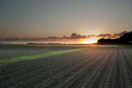Ondergaande zon in Friesland