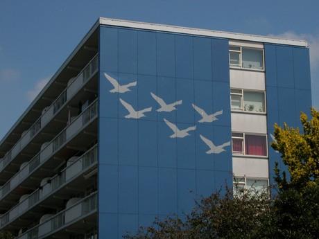 Een vlucht vogels....