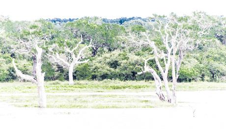 kale bomen
