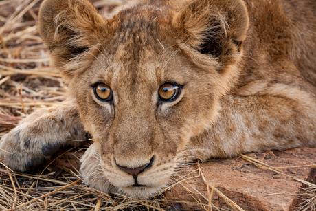 Eyes of Africa