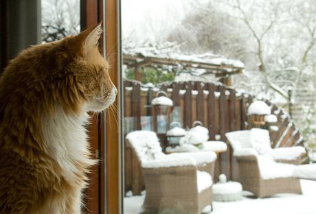 Winteruitzicht voor kat