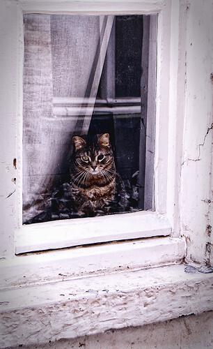Poezemie - Dit lieve, doch schele, beestje zat voor het raam te koekeloeren naar alles wat voorbij kwam. - foto door thuban op 25-03-2010 - deze foto bevat: poes, dieren, kat, belgie, brugge