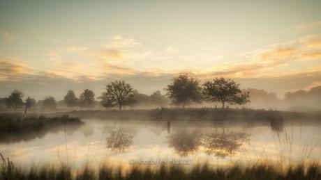 In the misty morning light