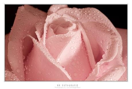 Roos met water