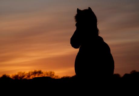 paard in tegenlicht