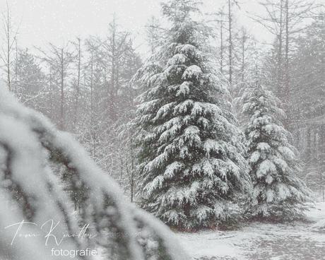 bomen tijdens sneeuwval