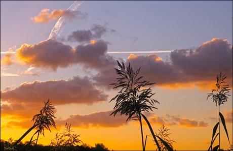 hollandse palmen