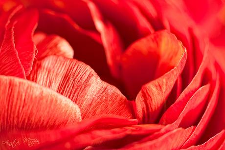bloem onbekend