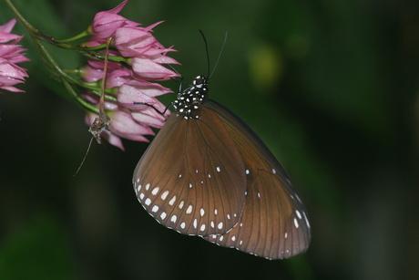 vlinder in blijdorp