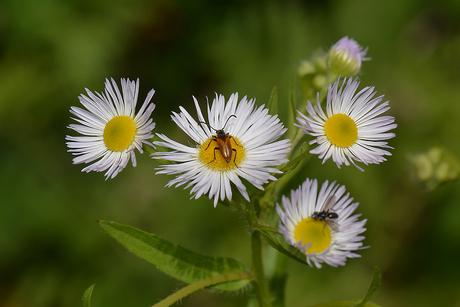 Bezoek voor de bloem