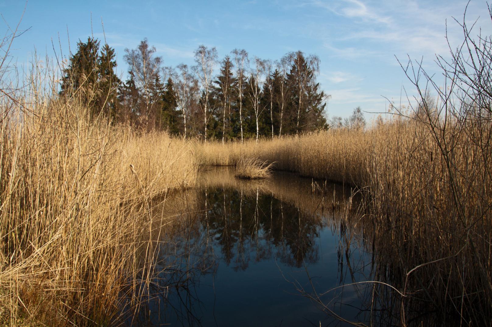 Hageven - Tussen Lommel-Kolonie en Neerpelt in België en Borkel en Schaft in Nederland ligt een gigantisch heide- en vennengebied. De Plateaus aan de Nederland - foto door kosmopol op 21-03-2012 - deze foto bevat: natuurgebied, ven, kosmopol