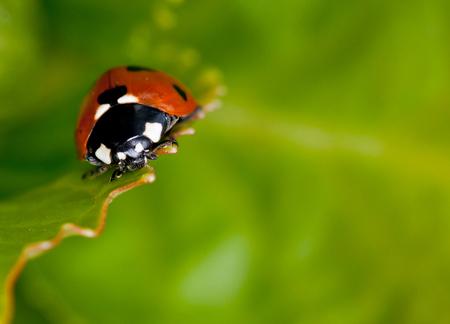 Lieveheersbeestje - in de tuin - foto door Tammy op 22-04-2012 - deze foto bevat: macro, lente, natuur, lieveheersbeestje, zomer, insect, zonnekoekje