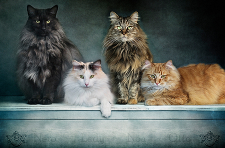 Cats - - - foto door ReflectionsFromWithin op 20-09-2016