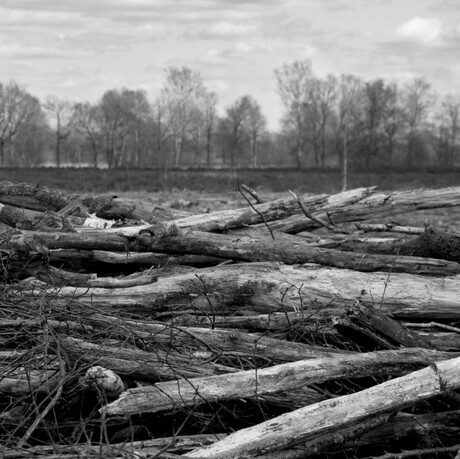 hout 1