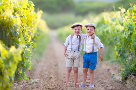 Wijngaard zuid Frankrijk