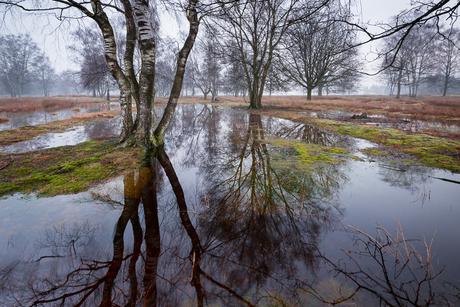 Strabrechtse Heide 316