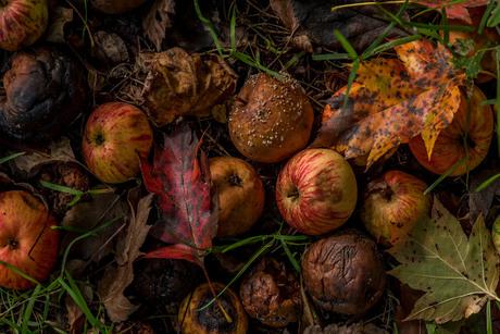 Herfst stilleven