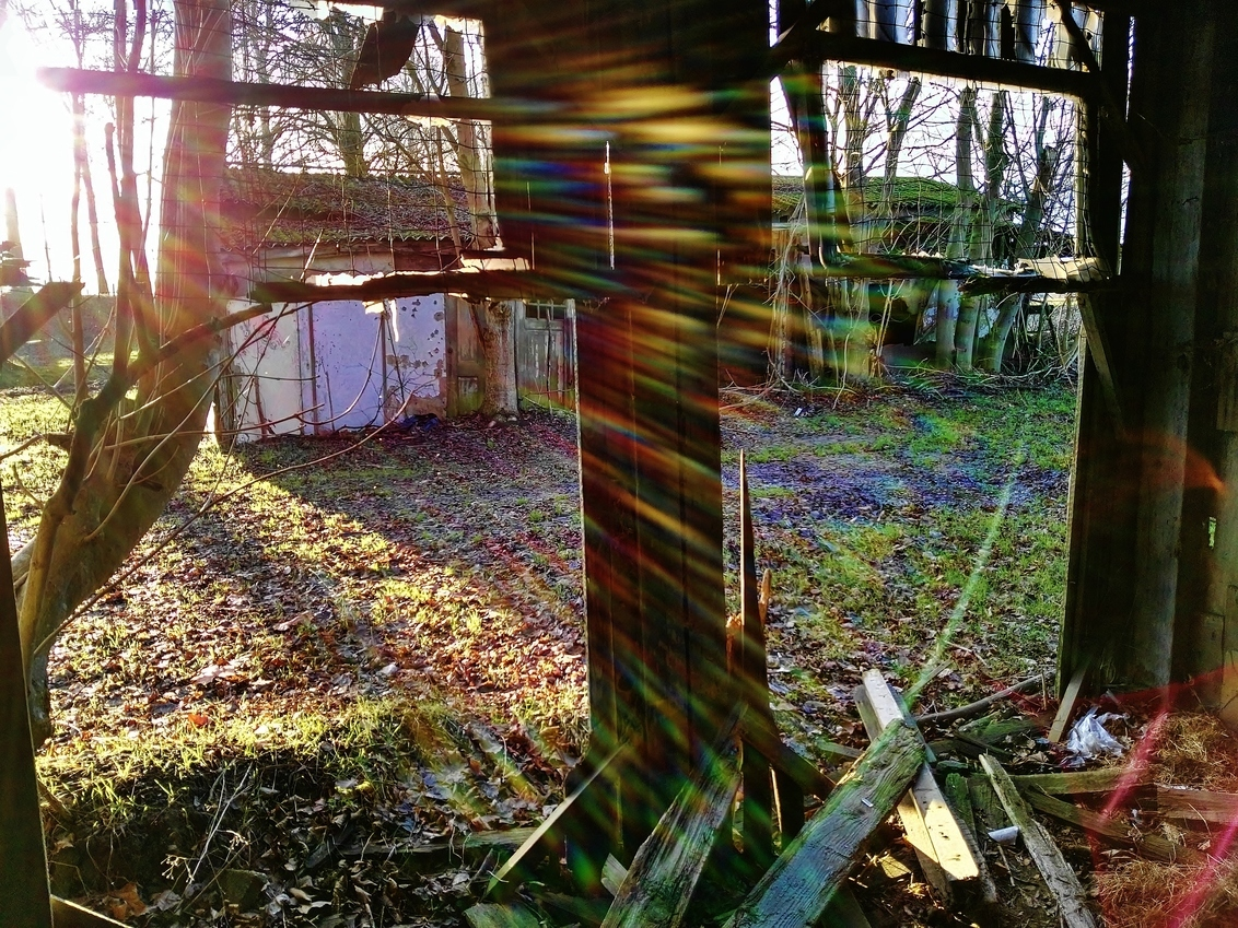 Sun Light - - - foto door f.arts1 op 30-12-2018 - deze foto bevat: oud, kleur, licht, winter, tegenlicht, bomen, reflecties, polder, verlaten, biesbosch