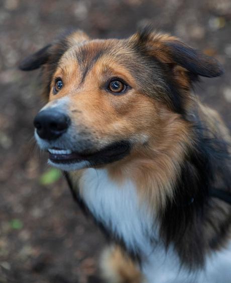 foto bokrijk Honden FB000