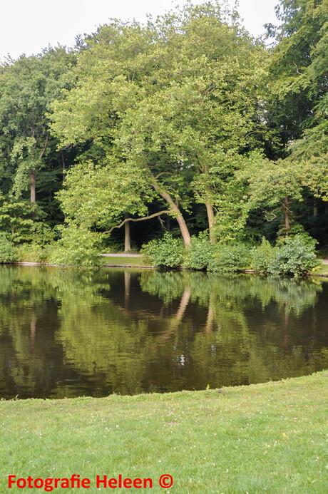 Kromme boom aan het water