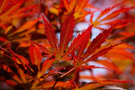 Leaves on Fire