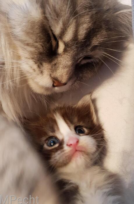 Veilig bij mama