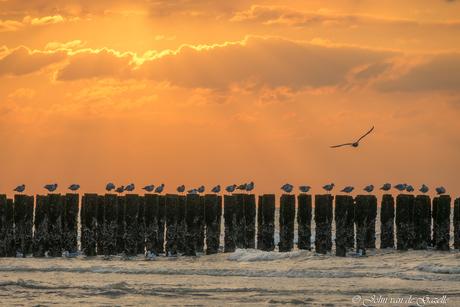 Meeuwen op een golfbreker op het strand van Domburg