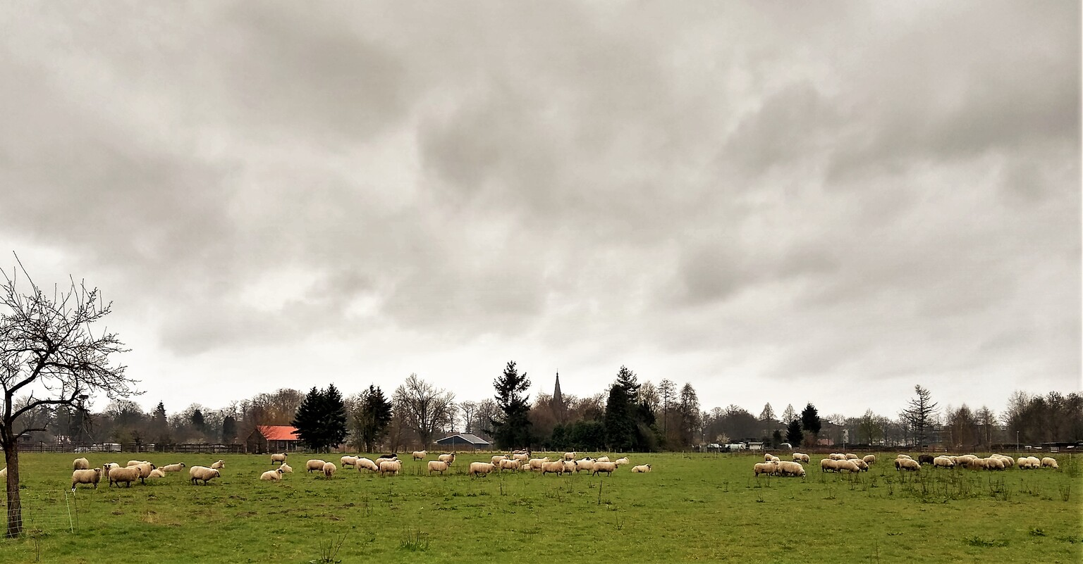 de Grolse weiden - Schaapskudde op de Grolse weiden. - foto door airam45 op 10-04-2021 - locatie: Groenlo, Nederland - deze foto bevat: wolk, lucht, fabriek, boom, natuurlijk landschap, land veel, gras, hoogland, huis, grasland