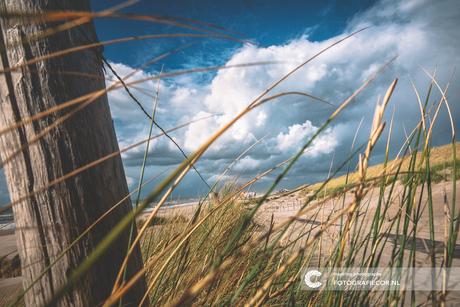 Frisse neus halen op het strand
