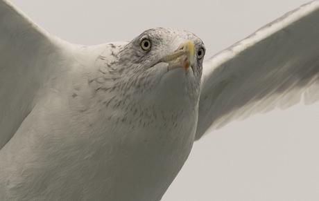 A birds view