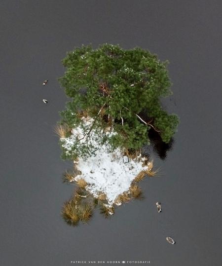 Eiland met zijn bewoners - Het eilandje midden in een vennetje waar 1 boom op staat. (Zie mijn overige foto's) Maar dan eens van bovenaf met sneeuw. De familie gans die elk jaa - foto door Patrick-van-den-Hoorn op 08-04-2021 - deze foto bevat: eiland, boom, ganzen, luchtfoto, drone, dji, sneeuw, water, riet, bovenaanzicht, vloeistof, fabriek, wereld, water, takje, natuurlijk landschap, gras, lettertype, evenement, bodem