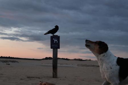 blaffende honden ....... - samen naar de zonsondergang kijken  - foto door paaltje op 16-04-2021 - locatie: 5151 RG Drunen, Nederland - deze foto bevat: vogel, kraai, hond, natuurgebied, wolk, lucht, vogel, hond, water, hondenras, strand, carnivoor, bek, fawn