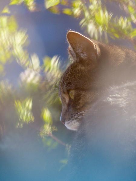 Focus... - Alle 2 gefocust! - foto door Olga1 op 16-04-2021 - deze foto bevat: kat, felidae, carnivoor, afdeling, bakkebaarden, kleine tot middelgrote katten, fawn, hout, boom, lucht