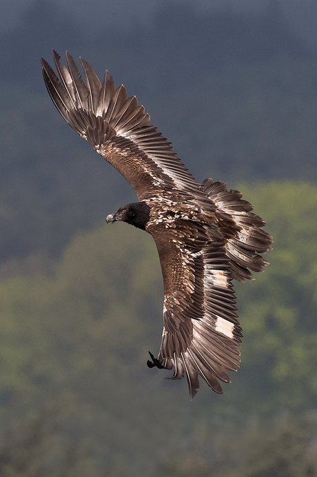 Flyby of the Bearde Vulture!