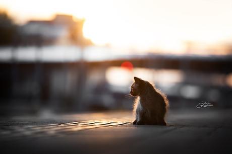 Kitten in de avondzon