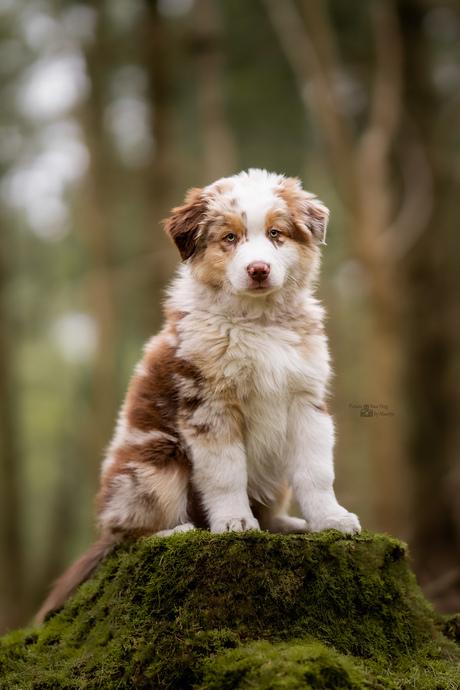 Knappe pup