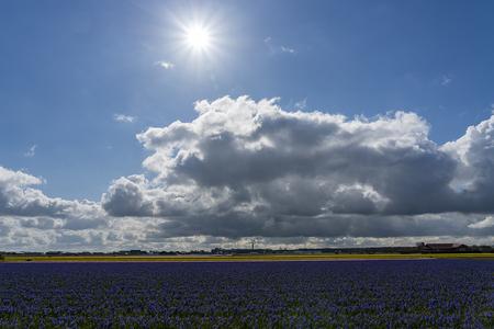 bollenvelden - bollen - foto door hoofdomhoogart op 16-04-2021 - locatie: Noordwijk, Nederland - deze foto bevat: #bollenvelden #lucht, #landschap, landschapfotografie, wolk, lucht, fabriek, atmosfeer, dag, ecoregio, natuur, mensen in de natuur, natuurlijk landschap, zonlicht