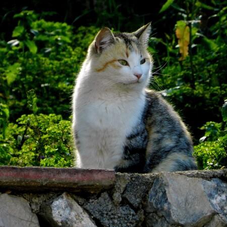 Kat - Iedereen weer bedankt voor de leuke reaktie's en complimenten op mijn vorige opname's - foto door awduijts op 17-04-2021 - deze foto bevat: kat, fabriek, oog, carnivoor, felidae, kleine tot middelgrote katten, bakkebaarden, gras, fawn, bodembedekker