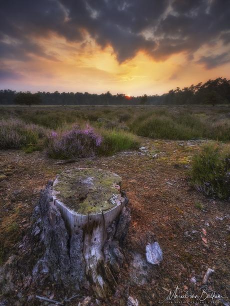 A sunset nabij de Efteling