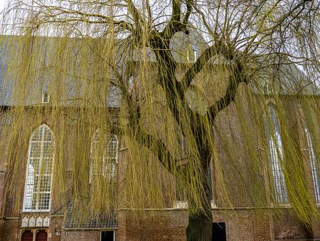In de gouden regen - XXX - foto door Jaap93 op 10-04-2021 - locatie: Elburg, Nederland - deze foto bevat: venster, gebouw, afdeling, hout, takje, gras, kofferbak, boom, houtachtige plant, fabriek
