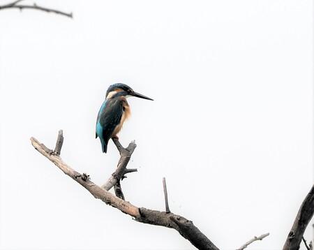 Mijn Reizen - Er komen daar In India   t drie soorten ijsvogels  voor    deze  is de ons bekende soort  noem  hem altijd de Blauwe  flits   gelukkig had ik hem  ko - foto door Stumpf op 12-04-2021 - locatie: India - deze foto bevat: vogel, bek, takje, veer, vleugel, lucht, reiger, dieren in het wild, piciformes, neerstekende vogel