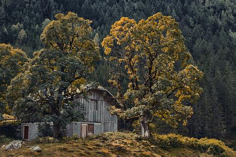 Moarhofalm - Oostenrijk