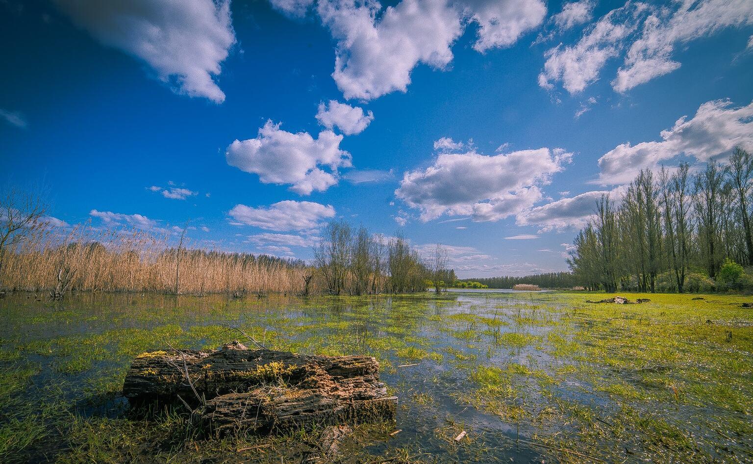 De Stille Kern - De Stille Kern is een prachtig natuurgebied in het Holsterwold bij Zeewolde. Op dit moment is het er erg nat en staan de bomen in het water    - foto door reinder.tasma op 17-04-2021 - locatie: Zeewolde, Nederland - deze foto bevat: landschap, stillekern, stillekern, landschap, water,moeras, wolk, lucht, fabriek, ecoregio, natuurlijk landschap, boom, zonlicht, mensen in de natuur, land veel, cumulus